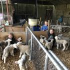Between 140 and 150 orphaned or rejected lambs are getting a second chance on Paula and Gareth...