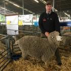 Waipara farmer James Hoban enjoyed a successful show, including winning champion Corriedale ewe....