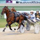 A G's White Socks will attempt a clean sweep of heats of the Interdominion Pacing Championship at...