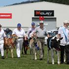 Cattle and calves walk in the grand parade as they make a welcome return to the Tokomairiro A&amp...