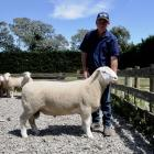 Dick Frahm with one of his award-winning Poll Dorset rams, which was recently sold to a Chilean...