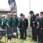 The Australian and New Zealand sheep dog trials test teams line up for the prizegiving after the...