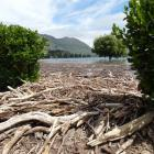 The rain and flooding brought tonnes of driftwood to the lakeshore at Wanaka township. Photo:...