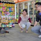 Stella Zou and Ken Lin, of the City Mini Market, enjoy their close encounter with a visiting duck...