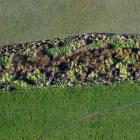 This planted wetland at Edievale in West Otago is being monitored to see how effectively it...
