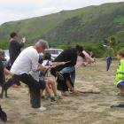 Members of the Otago Peninsula community joined forces with visitors for a tug of war, during a...