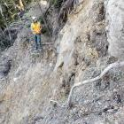 Workers examine a slip that pushed a digger 30m down a bank on the Paparoa Track. PHOTO: DOC
