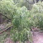 The Alexandra-Clyde river track was closed again yesterday, blocked by debris from fallen trees...