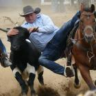 Micheal Nicholl, of Waitahuna, on his way to taking fourth place in the steer-wrestling event at...