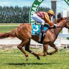 Point Score runs to an impressive maiden victory at Omakau yesterday for rider Kylie Williams....