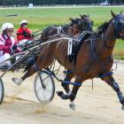 Amateur driver Mike Love reins Rah De Rah to win at Roxburgh on Saturday. PHOTO: JONNY TURNER