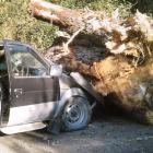 The stump was accidentally dropped by a digger operator. Photo: Supplied/ Pamela Coleman
