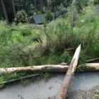 Part of a tree that fell into Kiwi Birdlife Park in Queenstown, damaging a fence. Photo: Guy...