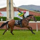 Wingatui trainer Claire Anderton says the ''time is right'' to take on the country's leading...