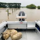 Nathan and Kellie Grant, of Hedgehope, used the family boat to rescue three lambs on their...