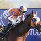 Star Matamata mare Melody Belle will contest the Futurity Stakes at Caulfield tomorrow. PHOTO:...
