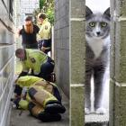 Firefighters and Dunedin Taxis call centre manager Mikey Beban try to coax Poppy the cat out of a...