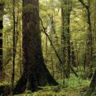 Climate change is throwing beech forests out of synch - a new finding that could have big...