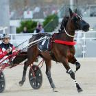 Pres The Belle is part of a strong team trainer Robert Dunn will start at today's Northern...