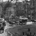 Wool-laden wagons leaving Takapau Station, Poverty Bay district for the shipping port. — Otago...
