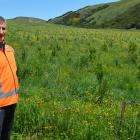 City Forests chief executive Grant Dodson at its recently acquired Takitakitoa Forest, south of...