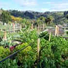 The Northeast Valley Community Garden, a great community asset, but is it the answer to all food...