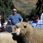 World Federation of Merino Breeders president Will Roberts, of Queensland, judges an all-breeds...