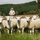 Mangapiri Downs organic stud farm's Tim Gow with Shire stud rams. Photos: Supplied