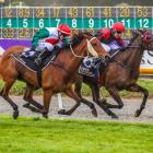 Ticket To Ride (inner) and Belle Fascino will clash in tomorrow's South Island Thoroughbred...