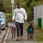 Taking the greyhounds for a walk on Ashgrove Tce, Somerfield.