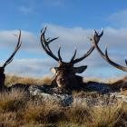 Recreational hunters are urged not to take deer carcasses off properties that have used...