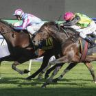 Etah James just finishes ahead of The Chosen One in the Sydney Cup at Randwick on Saturday.Photo:...