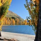 Yellowing poplars line Lake Wanaka. PHOTO: ANNA JOHNSON