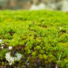 The sphagnum moss industry still employed quite a few people on the Coast. Photo: Getty Images