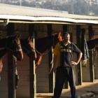Uncertain future ... Harness trainer Darryn Simpson with his horses at Forbury Park this week....