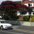 This beautiful manuka in North Rd is somewhat diminished now, following a recent 