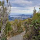 Some of the views from the Mt Cargill loop. PHOTOS: CLARE FRASER