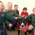 Therapy dog Jenson with year 7 pupils (from left) Libby Jackson, Layla Ward, Anna Green, Liam...