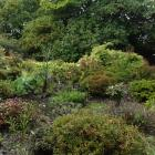 Rhododendron Dell at Dunedin Botanic Garden.PHOTO: ODT FILES