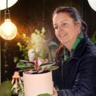 Residence on Blacks Road owner Sara Jackson-Falconer spritzes a Calathea Triostar (Stromanthe)...