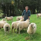 Improving hogget lambing...Sheep and beef farmer Geordie Eade, of Granity Downs, Pourakino Valley...