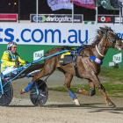 Ultimate Stride in action at the Australasian Breeders Crown last year. Photo:  Ashlea Brennan