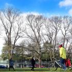 Deciduous European ash trees in the Otago Museum reserve are bare, while the deciduous Italian...