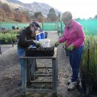 Volunteers Louise Hargreaves and Barbara Ladyman (right) removing weeds from around beech...