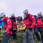 Mountaineers had to rescue Daisy the 55kg St Bernards dog. Photo: Wasdale Mountain Rescue Team