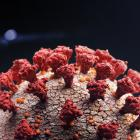 """The virus attaches itself to lung cells by binding its outer """"spike"""" proteins, something which..."""