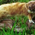 Scientists have unravelled the genetic make-up of one of New Zealand's most notorious killers -...