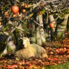 There are concerns around having sufficient workforce for the upcoming horticulture season in...