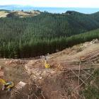 A logging gang works above Kuri Bush, south of Brighton. PHOTO: STEPHEN JAQUIERY