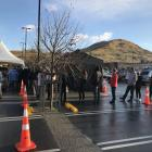There were long lines at the pop-up testing spot at Frankton Pak 'n' Save this morning. Photo:...
